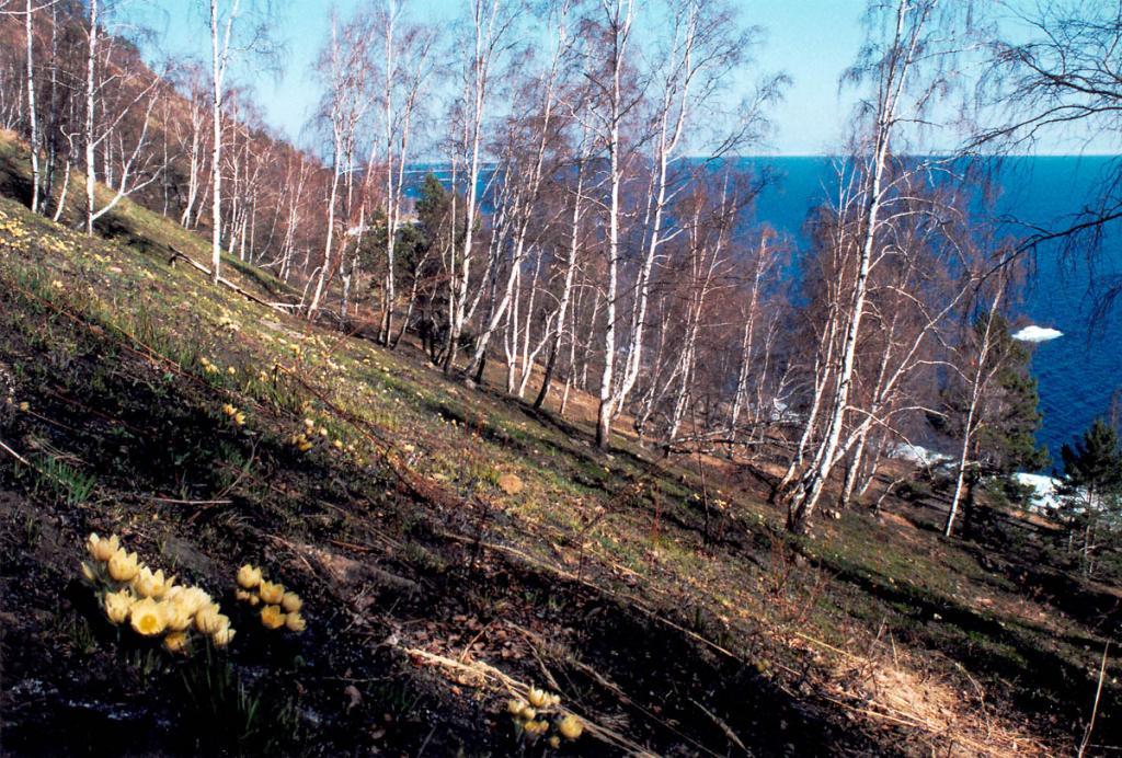 В море - последние льдины; на склонах - первые цветы: пробуждается земля Байкала от долгого сна.