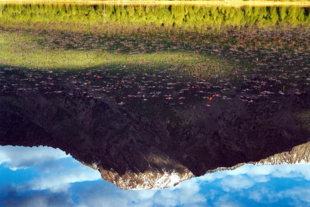 Отражение горы Елбырь в лагунном озере на мысе Большой Солонцовый. На поверхности воды листья горца земноводного ( Persicaria amphibia (L.) S.F. Gray).