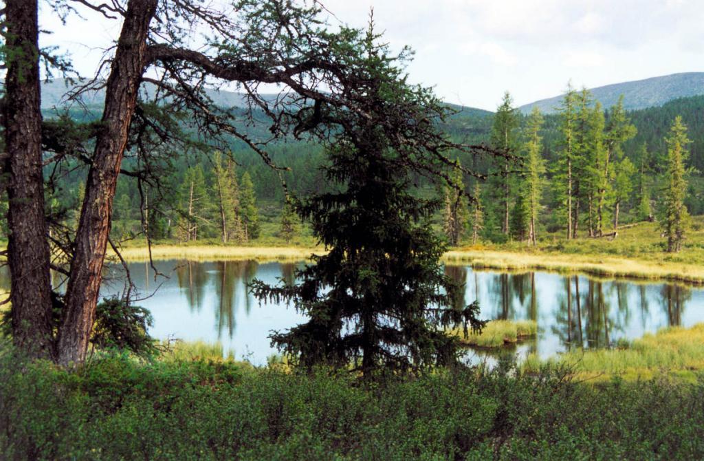 Лесное озерцо в долине реки Лена, окруженное осоками, лиственничным лесом и зарослями карликовых ивок. Байкало-Ленский заповедник.