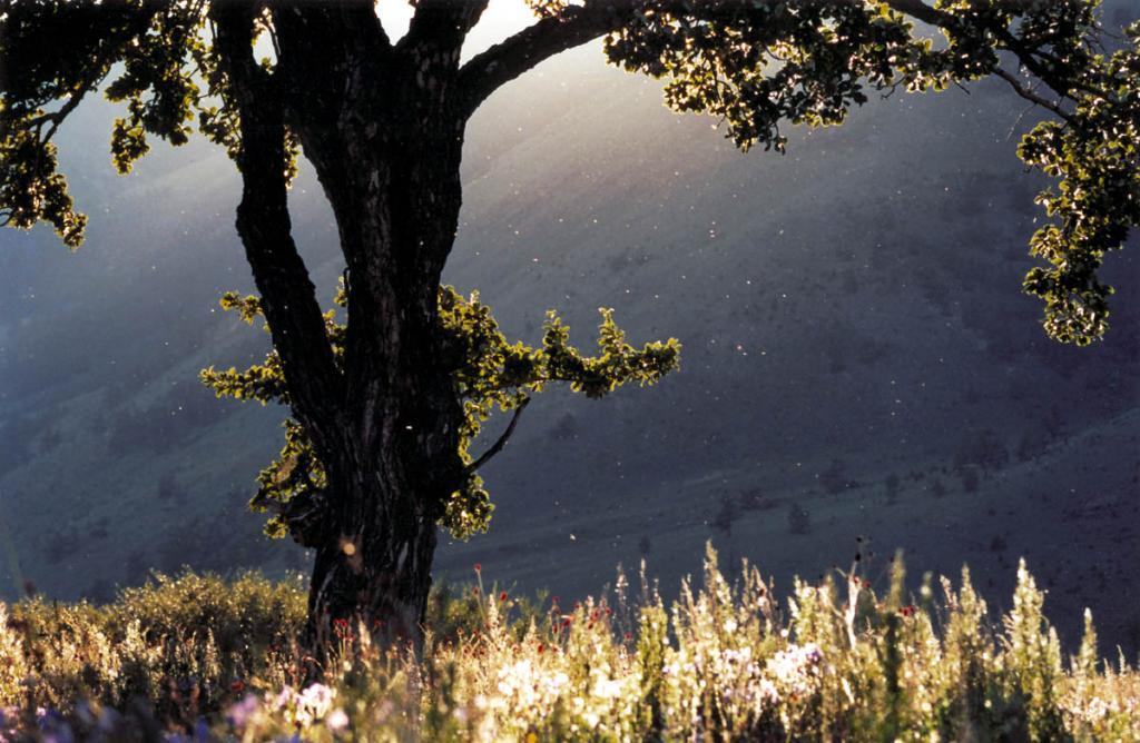 Весь мир, наполненный светом, есть музыка, непрекращающаяся музыка, постоянно продолжающаяся днем и ночью. На снимке: закат в степи на мысе Хыр-Хушуун (Рытый).