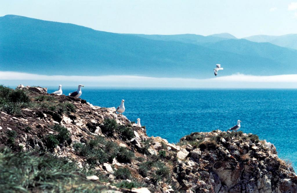 Чайки облюбовали практически все скалистые байкальские острова. На снимке: на южной оконечности острова Долгий находится один из самых красивых чаячих базаров на Байкале.