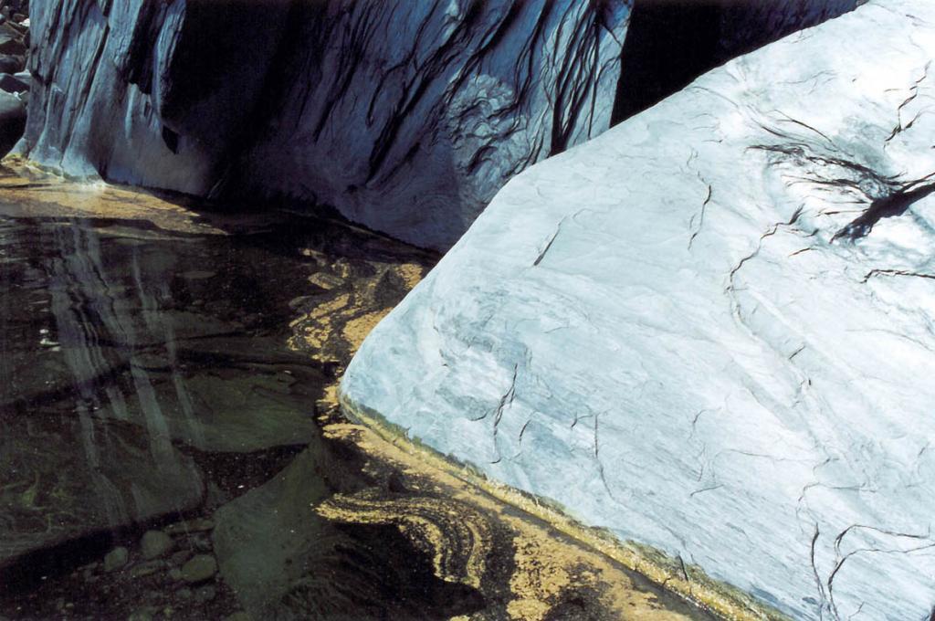 Пыльца сосен у береговых скал Байкала иногда обманчиво похожа на слой водорослей.