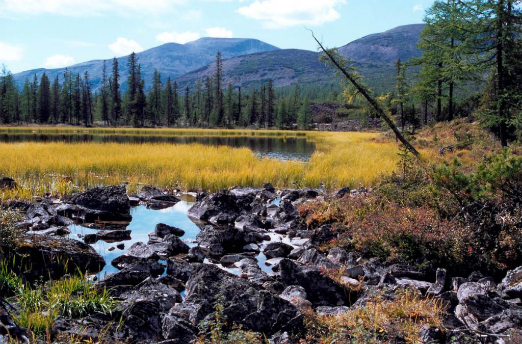 Небольшое озерцо в вершине речки Шартлинская Лена. Байкало-Ленский заповедник.
