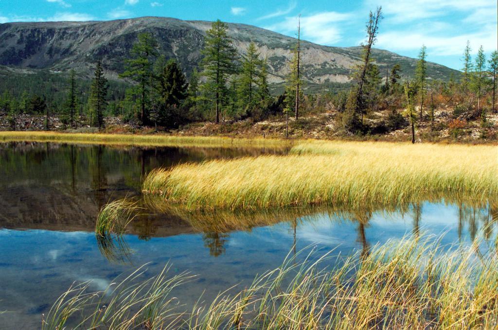 На дне этого озерца видны следы лосей, бродивших здесь в окружении первозданной природы. Перевал р. Риты - р. Шартлинская Лена. Байкало-Ленский заповедник.