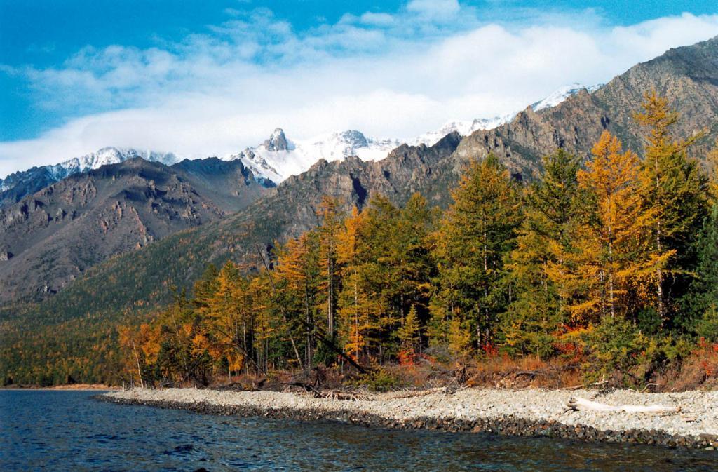 Осенний берег мыса Заворотный: лиственницы начинают желтеть в середине сентября, первый снег покрывает вершины гор в начале сентября, но скоро тает, устойчивый снеговой покров на гольцах появляется только в начале октября.