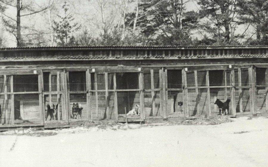 Иркутский питомник лаек в с. Моты. Вольеры с лайками. Фото 1972 года