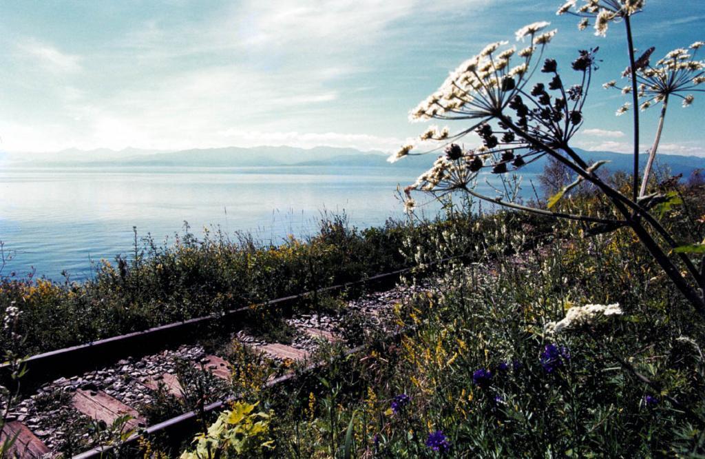 Тишина одного из важнейших участков Транссиба, после полувека службы превратившегося в тупиковый, редко нарушается пригородными поездами.