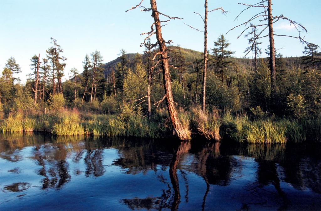 Заболоченный лиственничник на левом берегу речки Фролиха (1 километр от устья).