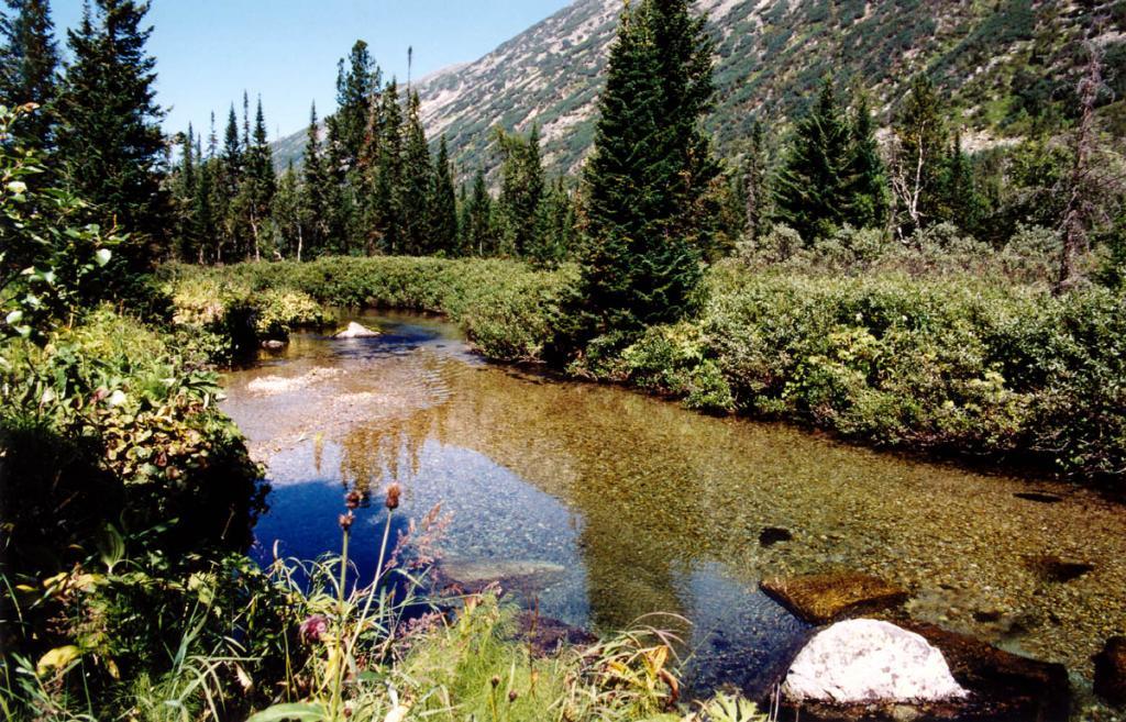 Парковые субальпийские пихтарники на берегу речки Шумилиха. Баргузинский заповедник.