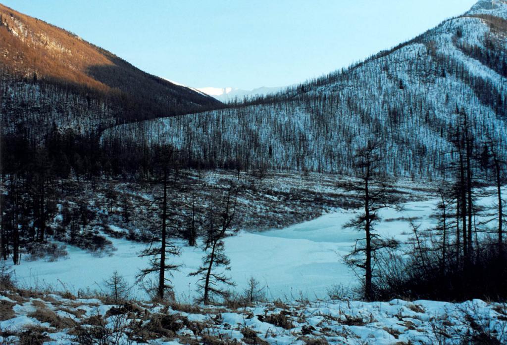 В долине речки Идэн (правый приток реки Уда). Тофалария. Снимок сделан в феврале.