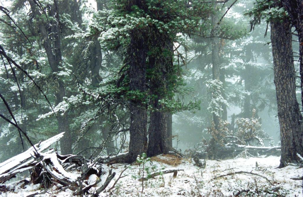 Общая площадь лесного фонда бассейна озера Байкал составляет 20 248,5 тыс. га, в том числе покрытая лесом 16 793,5 тыс. га. Древостой хвойных пород занимают 77,5 % покрытой лесом площади, в том числе лиственничники — 33,5, сосняки — 29,1, кедровники — 12,2, ельники и пихтачи — 2,7 %. Лиственные породы преобладают на 11,8 % площади, заросли кустарников (преимущественно кедрового стланика) — на 10,6 %. За последние 5 лет покрытая лесом площадь в целом по региону сократилась на 19,6 тыс. га, хвойных лесов — н