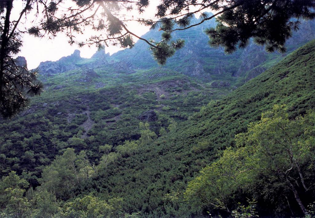 Кедровостланиковые сообщества (Pinus pumila L.) формируют свой уникальный и чрезвычайно труднодоступный мир малахитовых ковров из ароматной хвои на склонах всех горных хребтов, окаймляющих северный Байкал. Снимок сделан на восточном склоне Байкальского хребта у южного подножия горы Елбырь.