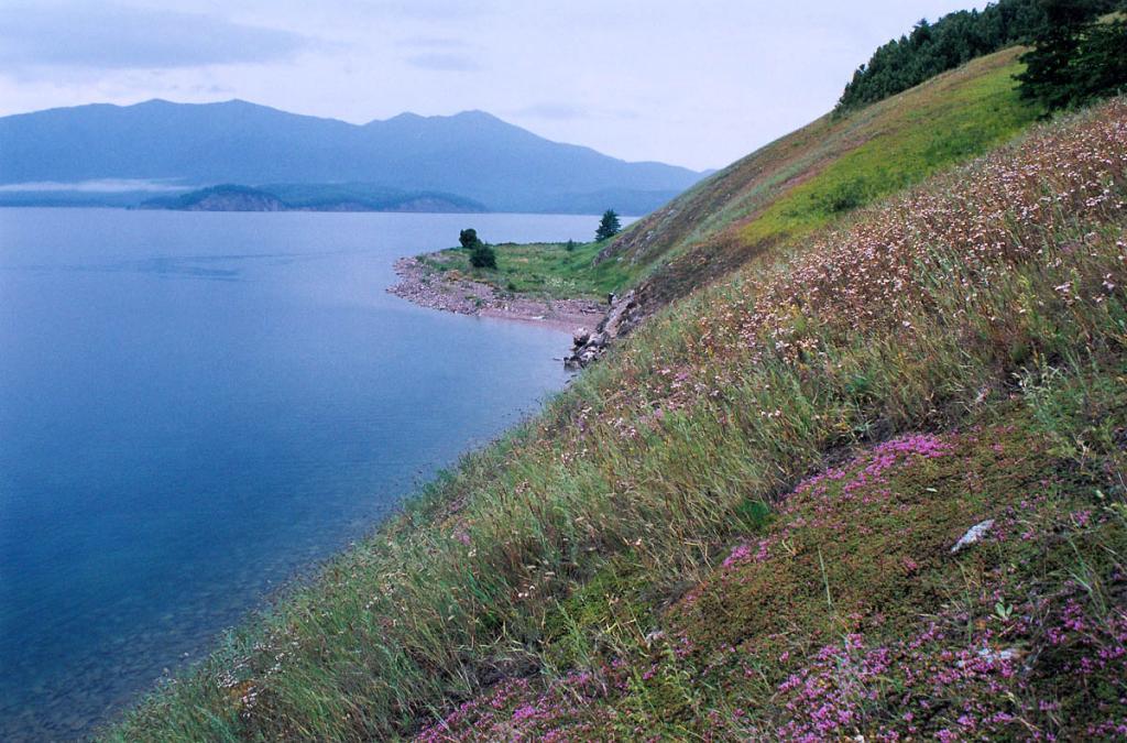 Заросли тимьяна Павлова (Thymus pavlovii Serg.) (на переднем плане) на южном склоне острова Голый Колтыгей.