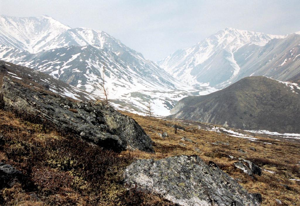 Выше 2000 м. в горах Мунку-Сардыка - царство кустарничково-травянисто-лишайниковой тундры, камня, льда и снега.