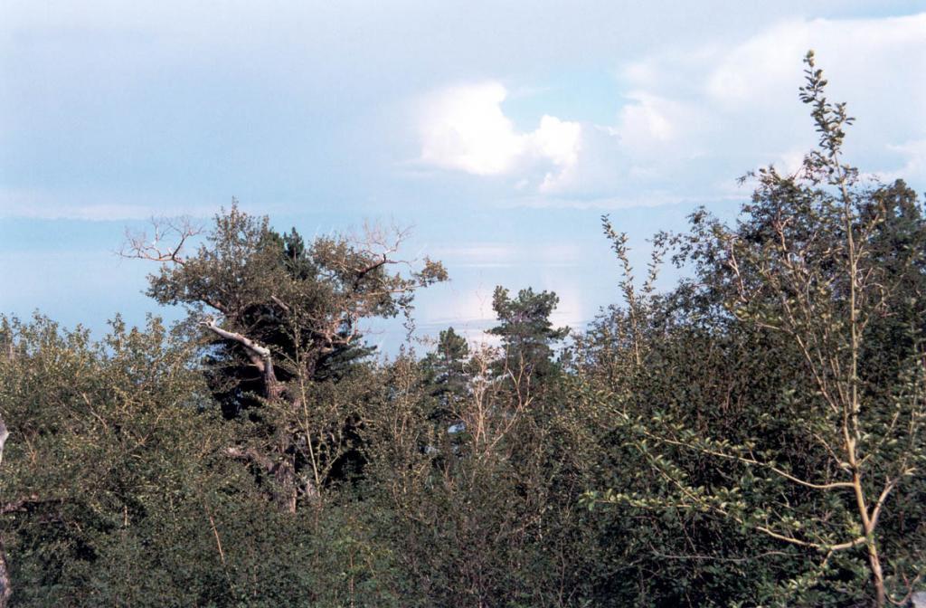 В долинах многих рек, несущих свои чистые воды в северный Байкал, можно встретить настоящие первобытные леса-джунгли из кедров, лиственниц и тополя душистого. Порой они мало отличаются от лесов субтропических широт. Снимок сделан в вершине ручья Среднего Кедрового.