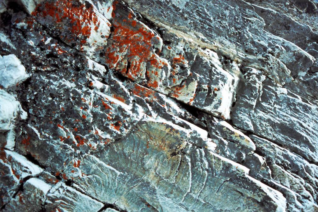 Прибрежные скалы Байкала покрывает тонкий налет накипных лишайников.