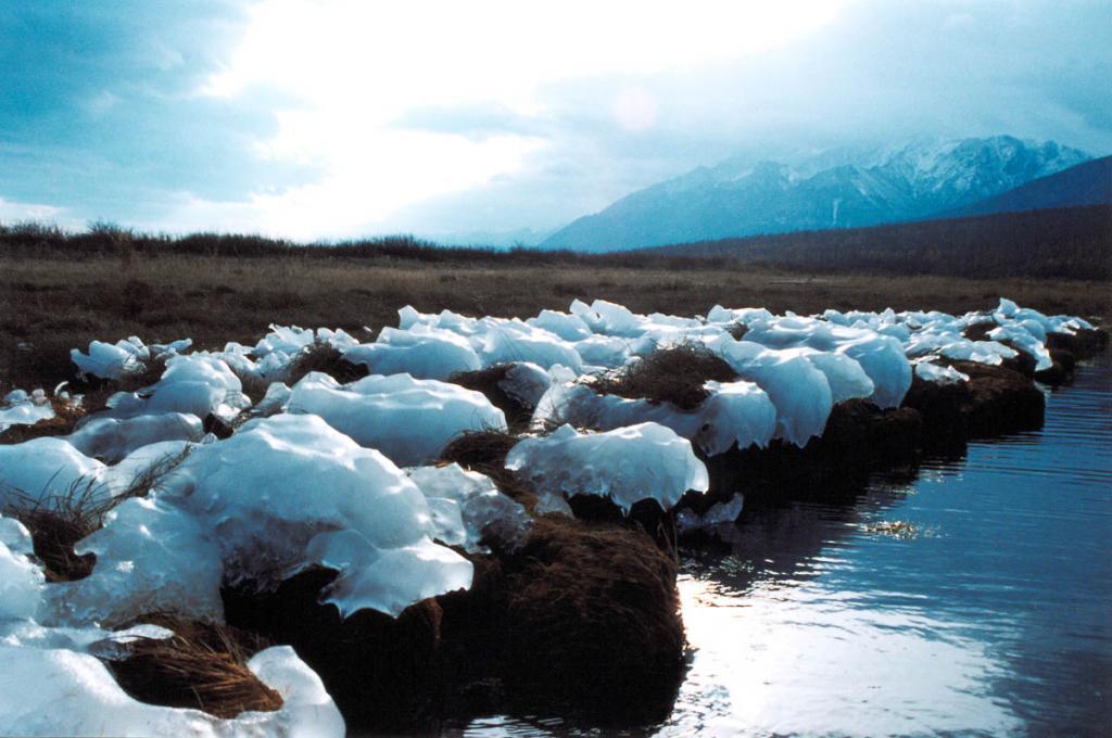 Во время сильного северо-западного ветра водяные брызги с поднятых ветром волн замерзли на кочках осоки в бухте Заворотная.