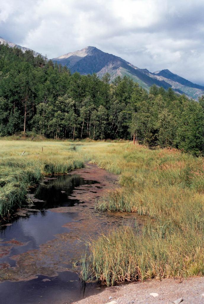 Зарастающее (осокой) лагунное озерцо на мысе Южный Кедровый (северный угол).