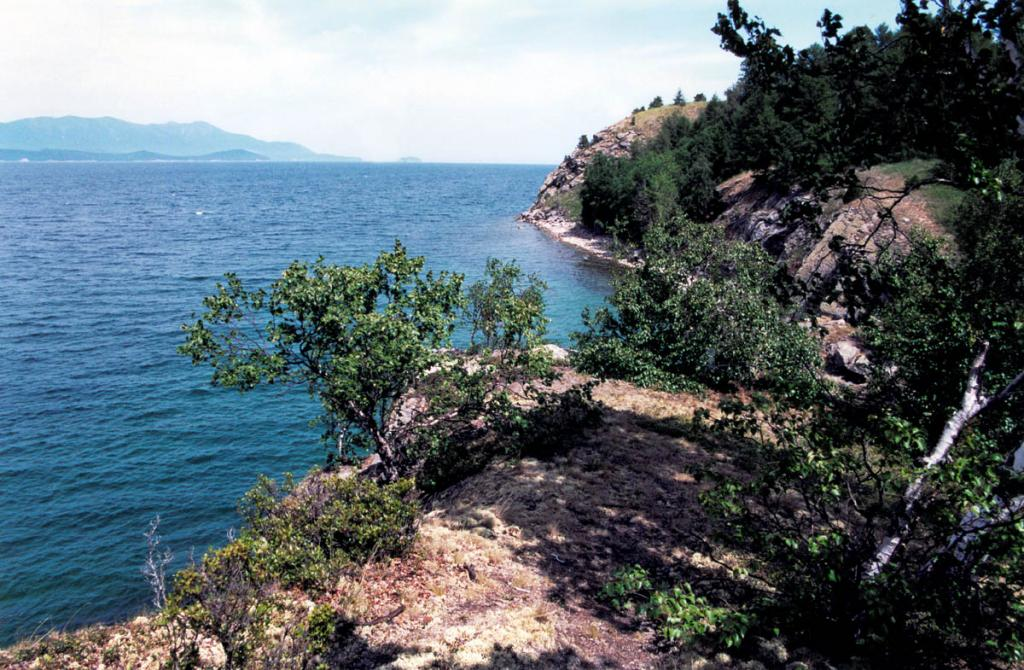 Над живописным северо-западным берегом острова Бакланий уже несколько десятилетий не слышно криков большого баклана, в прошлом одной из широко распространенной на Байкале птицы.