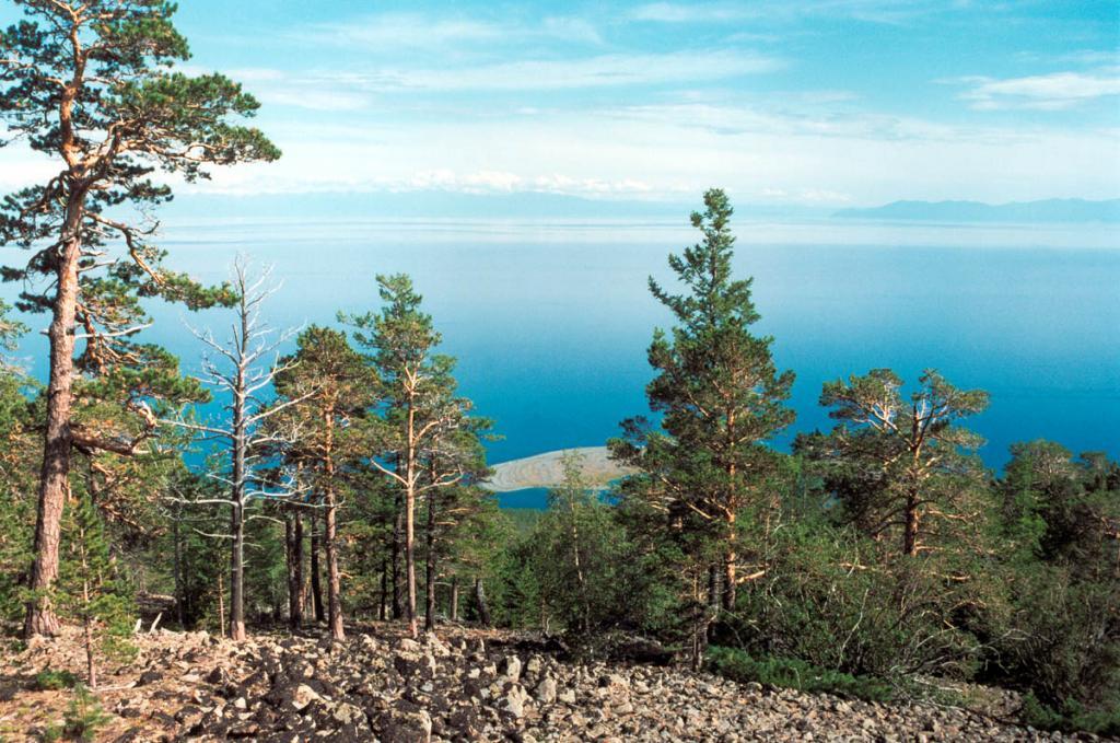 В летние месяцы 31000 квадратных километров водного зеркала Байкала накапливают и передают глубинам озера энергию солнца. На снимке: сосновый лес на восточном склоне Байкальского хребта (внизу просматривается песчаная коса бухты Заворотная).