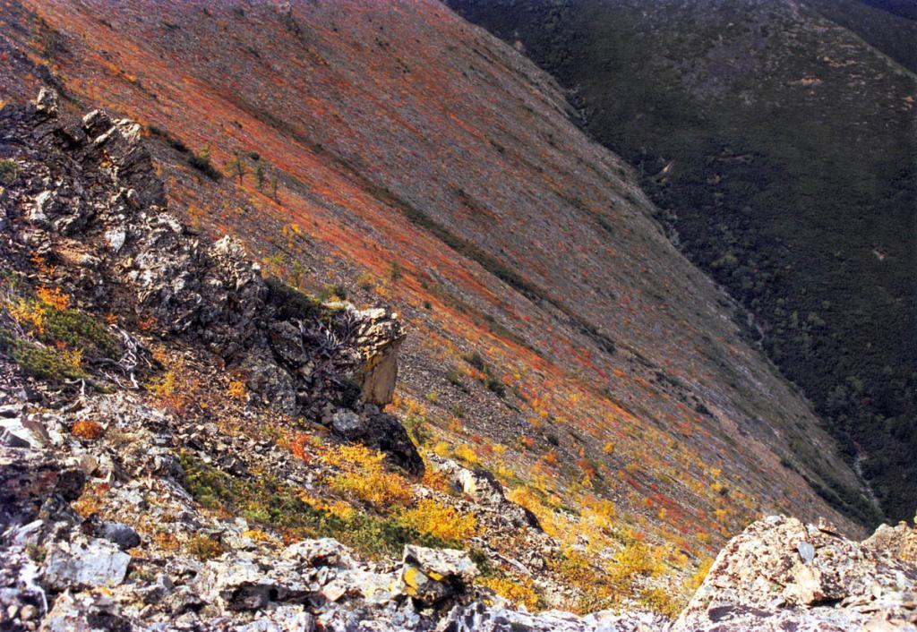 Сентябрьский северный склон на Байкальском хребте: лиственные кустарники и кустарнички приобретают яркую окраску. Снимок сделан в вершине пади Покойницкой.