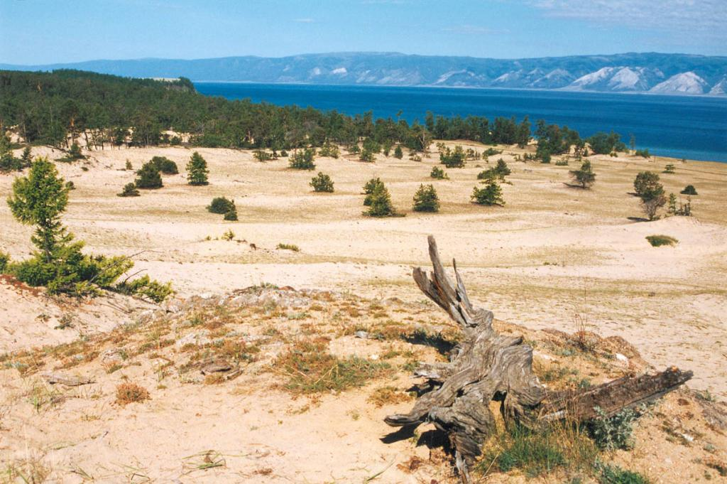 Окраину уникального урочища Песчанка покрывают сосновые леса. Некоторые из деревьев занесены песком по макушку. С восточного края урочища открывается красивый вид на Малое море и горы Приморского хребта.