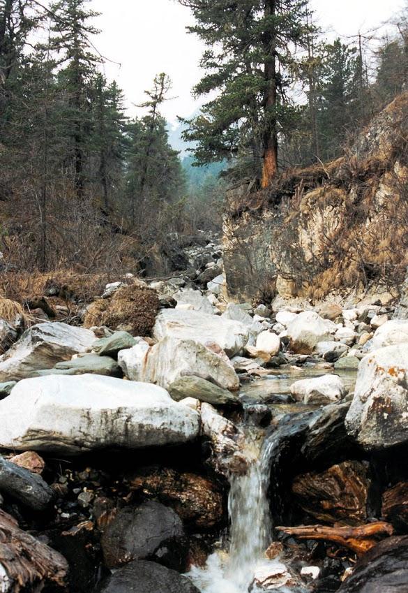 Наиболее густая речная сеть в Прибайкалье находится в горных системах Восточных Саян и Хамар-Дабана. На снимке: безымянный ручей на хребте Мунку-Сардык.