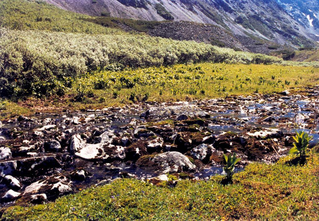 Молодая зелень высокогорного луга, обросшие лишайниками камни в русле ручейка и зеленовато-белесые кусты ивы Крылова создают типичные для летних байкальских высот природные орнаменты.