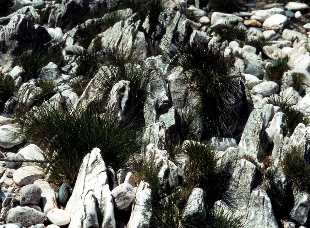 Такой орнамент из мраморов и злаковых куртинок встречается на берегу Большого Ушканьего острова.