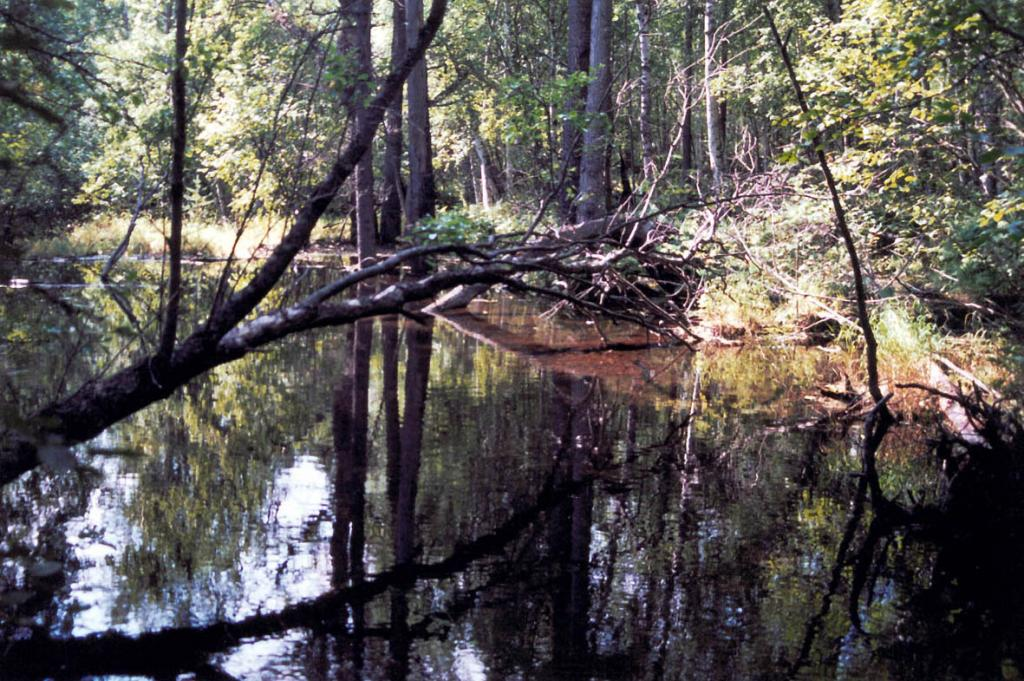 Фильтруясь через тихие лесные заводи и болота, омывая корни целебных трав и деревьев, вода приносит в Байкал особое качество жизнеспособности.
