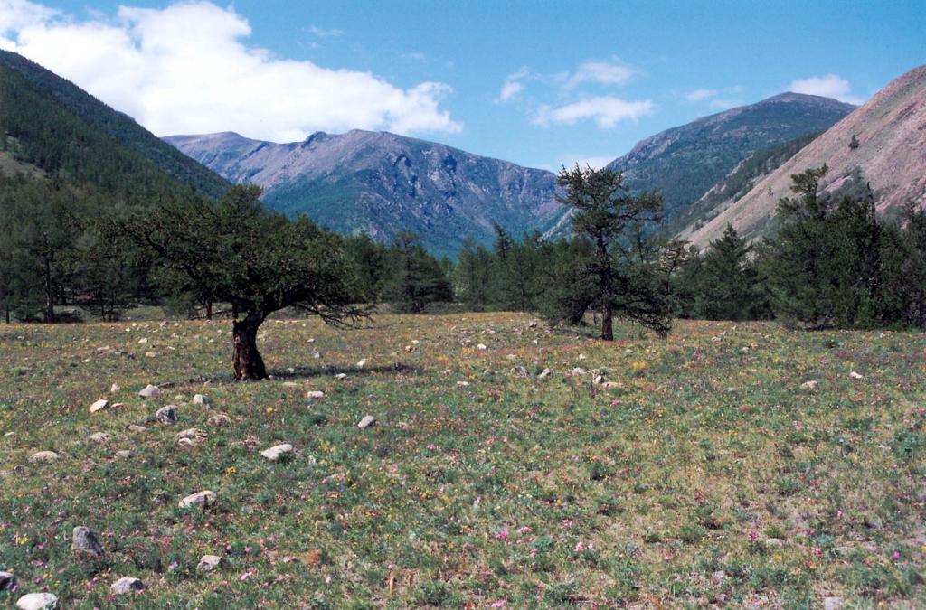 На северо-западном побережье находятся крупные сейсмодислокации. Наиболее впечатляющая из них - это Шартлинский сброс, образованный в результате гигантского обрушения скального массива на 600-700 метров вглубь земли (на снимке: распадок (речка Шартла) в центре кадра).
