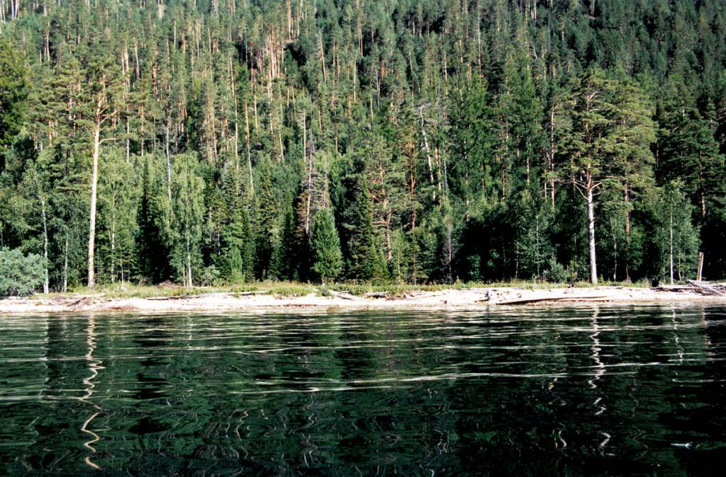 На многих участках байкальского побережья к берегу вплотную подступает дикая тайга. Снимок сделан на восточном берегу полуострова Святой Нос.