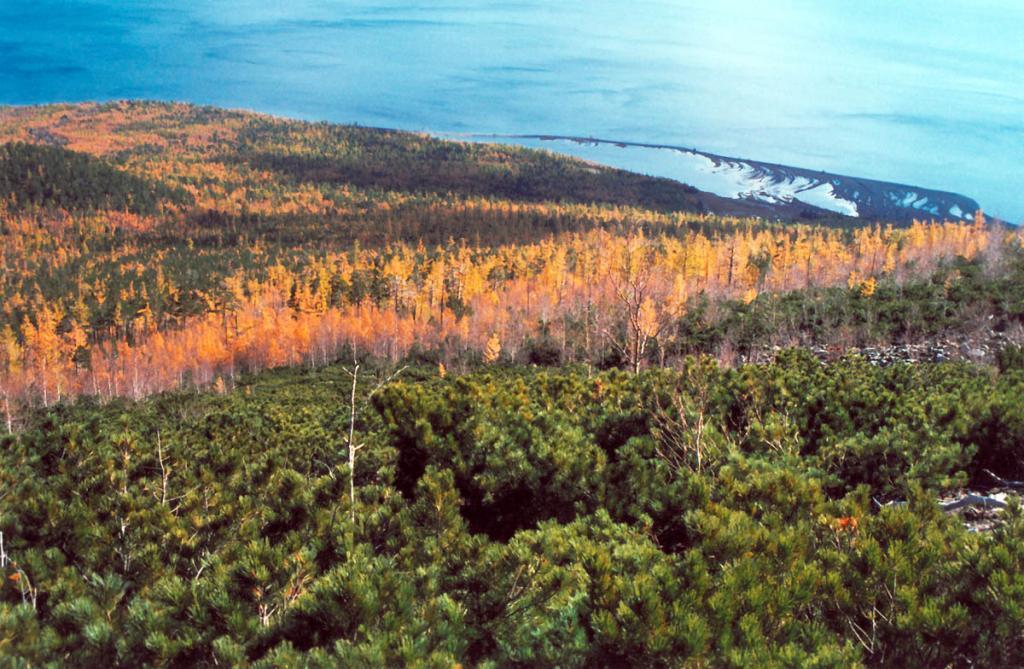 Изумрудная корона кедрового стланика венчает лесной пояс гор Северного Байкала. На снимке: над мысом Средний Кедровый.