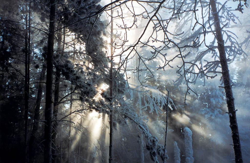 В зимнем прибайкальском лесу.