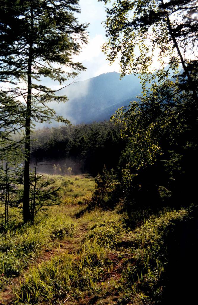 Вечер на лесной полянке (мыс Заворотный).