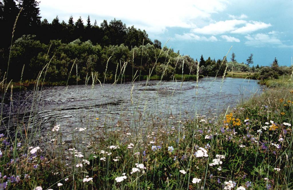 Река Голоустная - один из крупнейших притоков на юго-западном побережье Байкала.