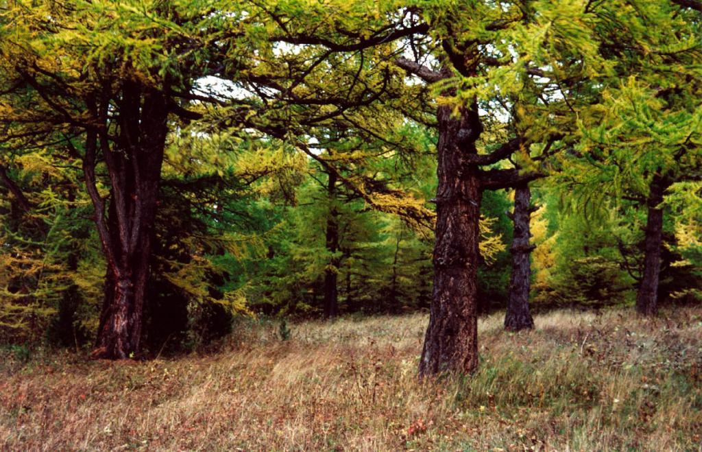 Первая морозная осенняя ночь начинает раскрашивать лиственничные леса Байкала в желтый цвет. Снимок сделан на мысе Елохин.