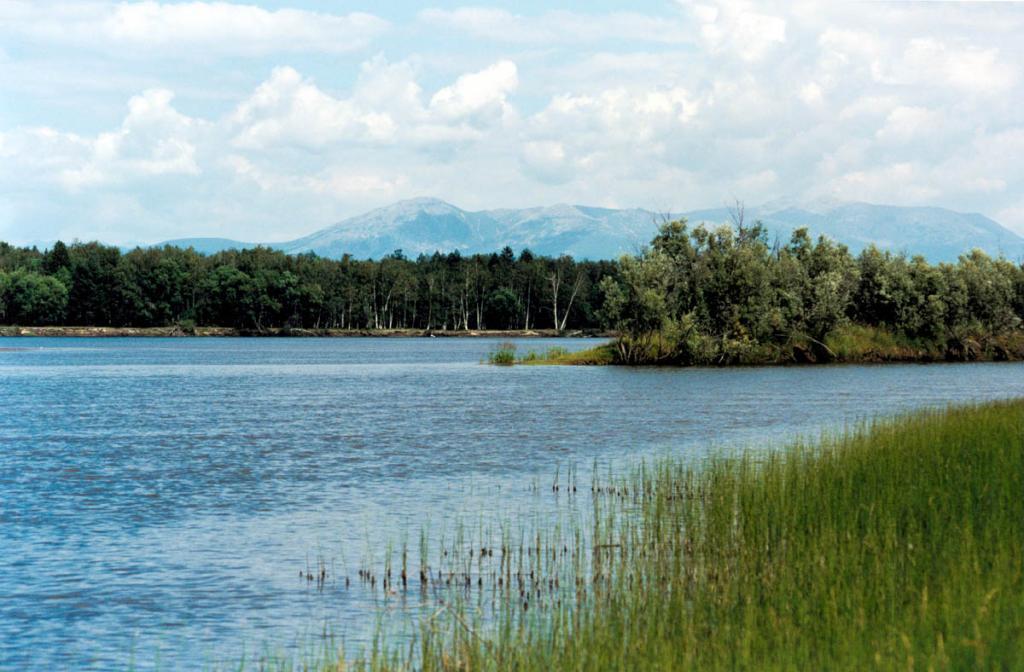Заросли хвоща на мелководном заиленном берегу реки Верхняя Ангара.