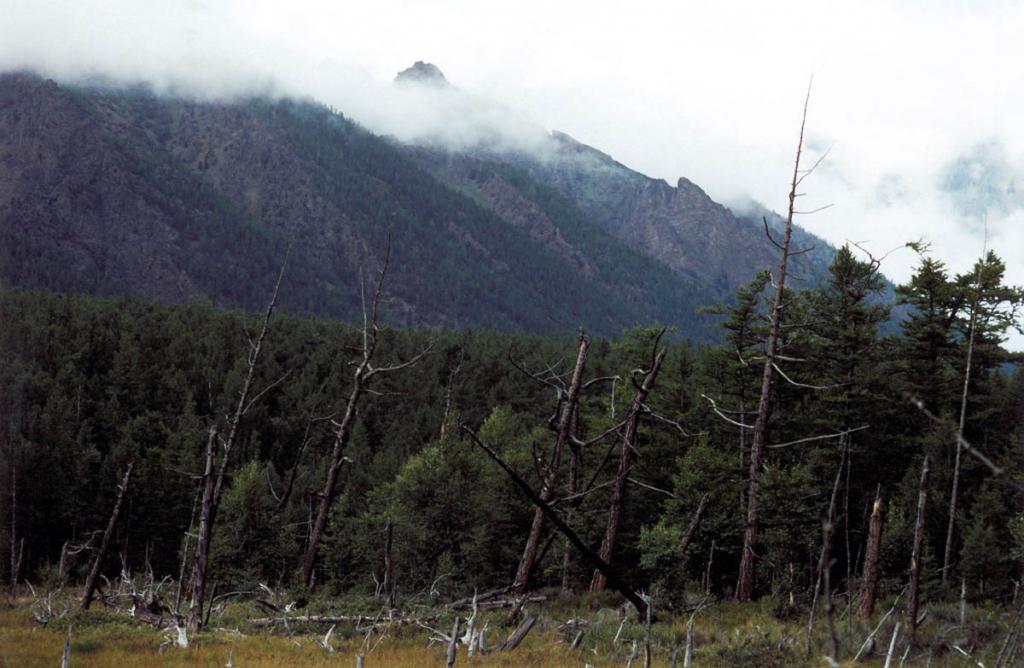 Лиственничный лес на мысе Малый Солонцовый. Байкало-Ленский заповедник.