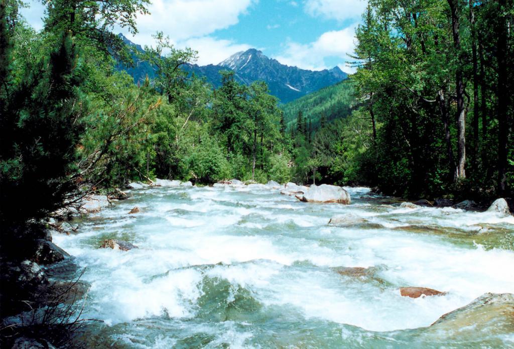 Река Левая Сосновка несет свои чистые воды среди труднопроходимых баргузинских джунглей.
