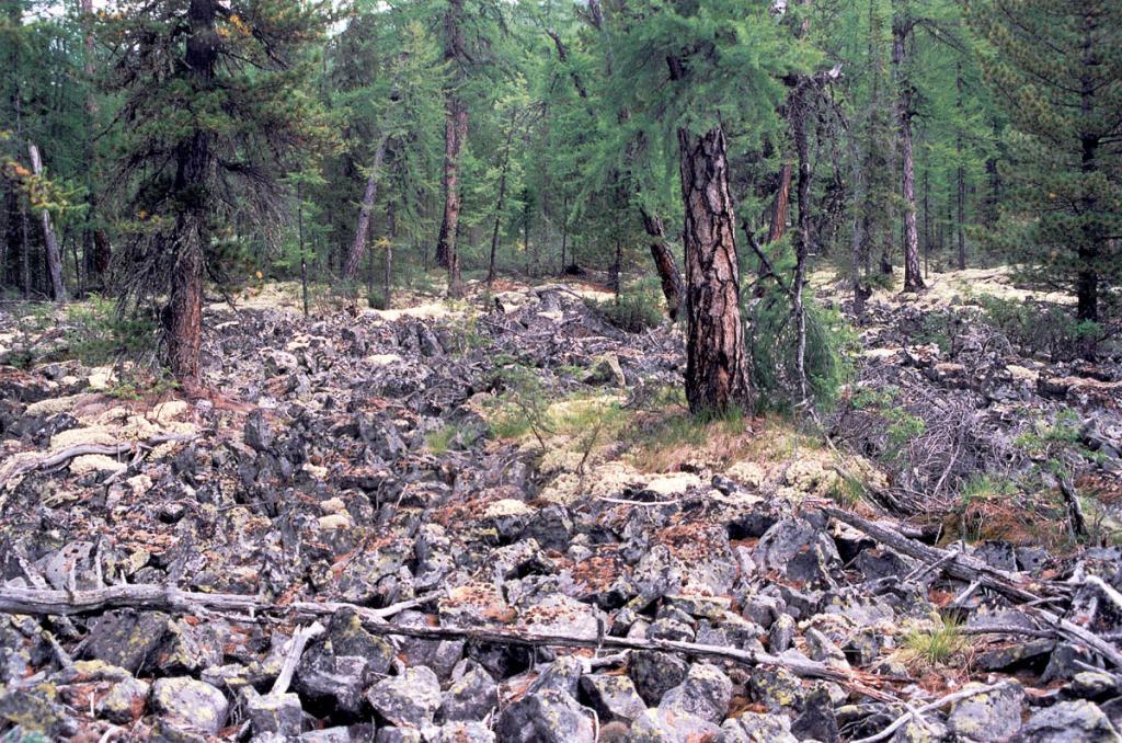 Одной из причин высотного ограничения древесной растительности в горах Прибайкалья является широкое распространение каменных россыпей. Снимок сделан на западном склоне Байкальского хребта.
