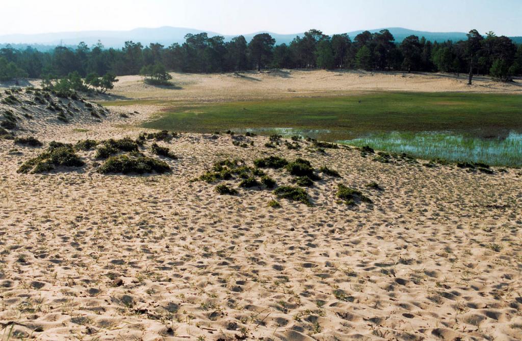 Вблизи п. Хужир песчаные валы окружают уникальную влажную низину, заросшую осокой. Сейчас на ее южной стороне растет сосновый лес, а когда-то (по данным спорово-пыльцевого анализа) здесь шелестели теплолюбивые широколиственные леса:магнолии, мирны, дубы и др.
