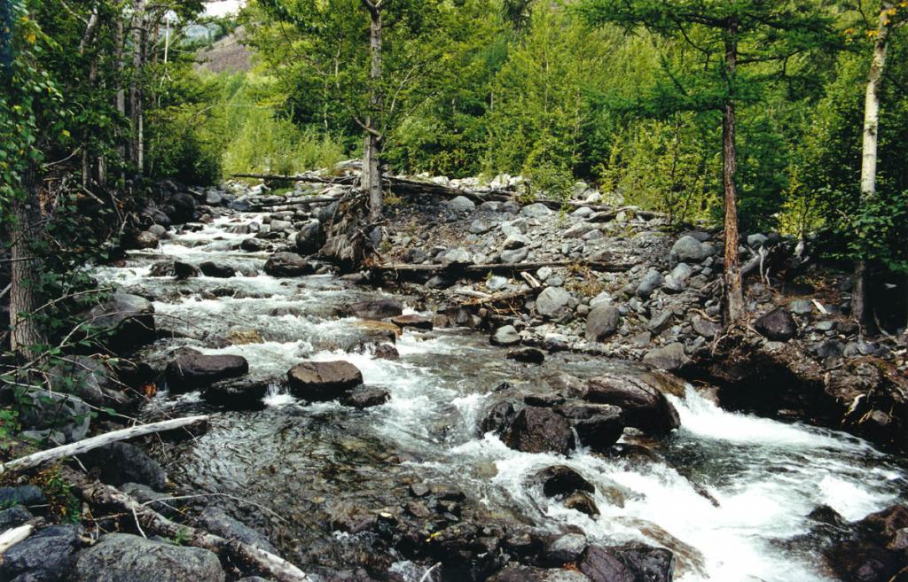 Долина речки Заворотная (среднее течение) - типичная из малых горных рек на северо-западном побережье Байкала. На берегах произрастают, в основном, тополь душистый, кедр и пихта. Днище долины сложено слабоокатанными валунами и глыбами. Длина речки 8.5 километров.
