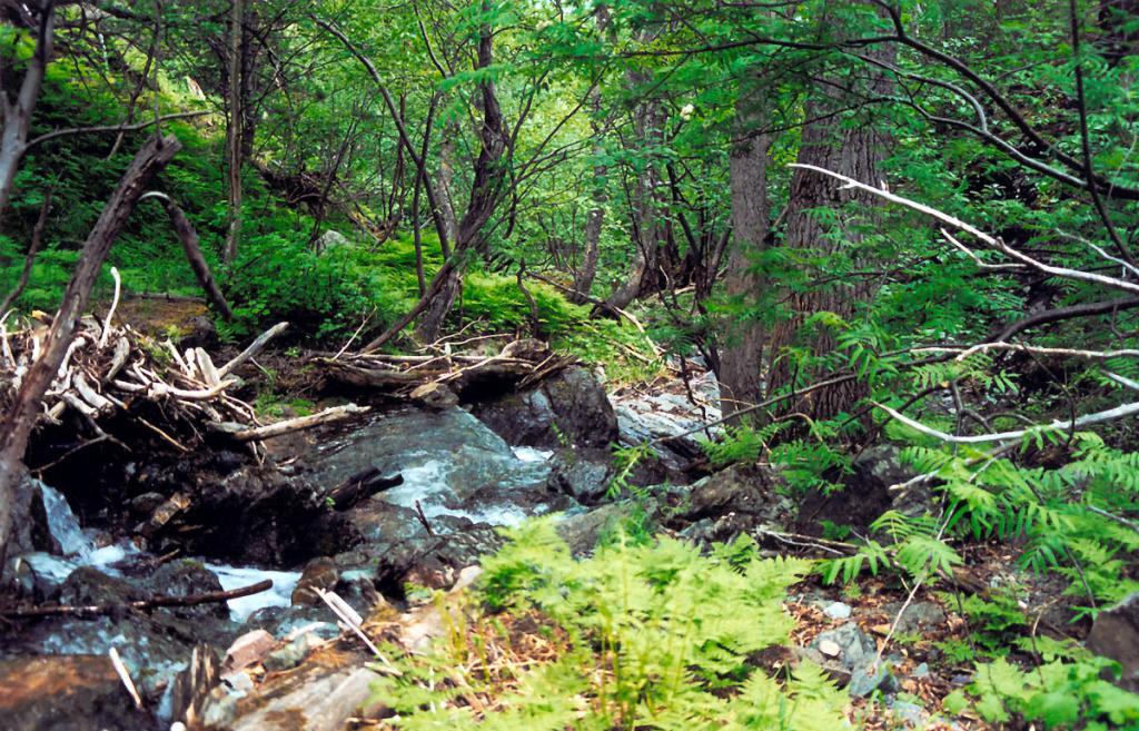 В долине горного ручья, одного из сотен, стекающих с байкальских гор.