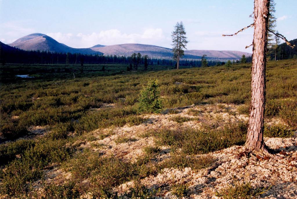 Вечерние краски в горной лесотундре на Байкальском хребте (долина верховий р. Лена, 2 километра от истока).