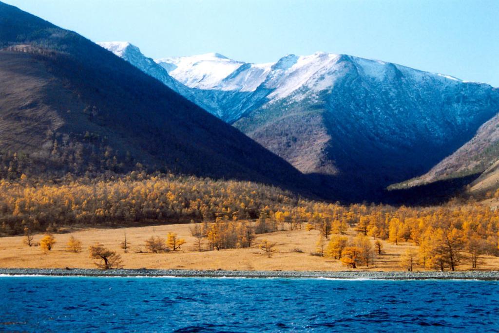 На конусе мыса Шартлай развита лиственничная лесостепь. Снимок сделан в конце сентября. БЛГЗ.