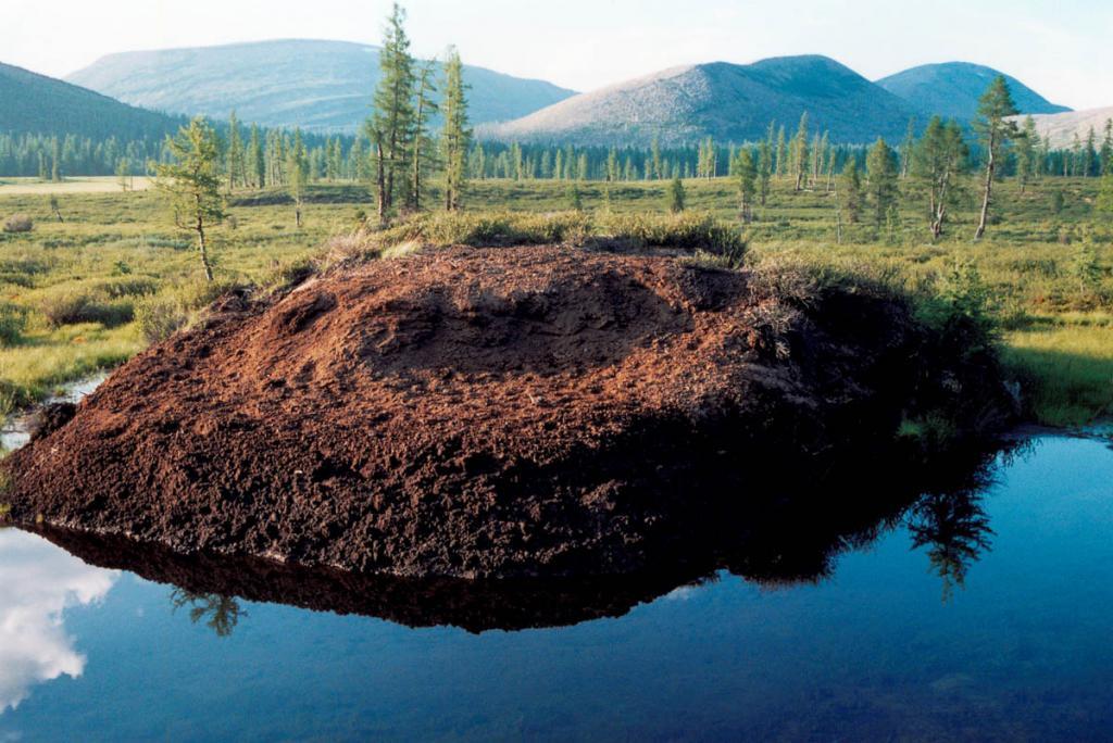 В зоне многолетнемерзлотных грунтов ( как на побережье Байкала, так и в горах) нередко образуются так называемые бугры пучения. На снимке: мерзлотный бугор пучения в долине р. Лена (2 км. от истока) судя по обилию на нем следов копытных, по-видимому, является еще и природным солонцом.
