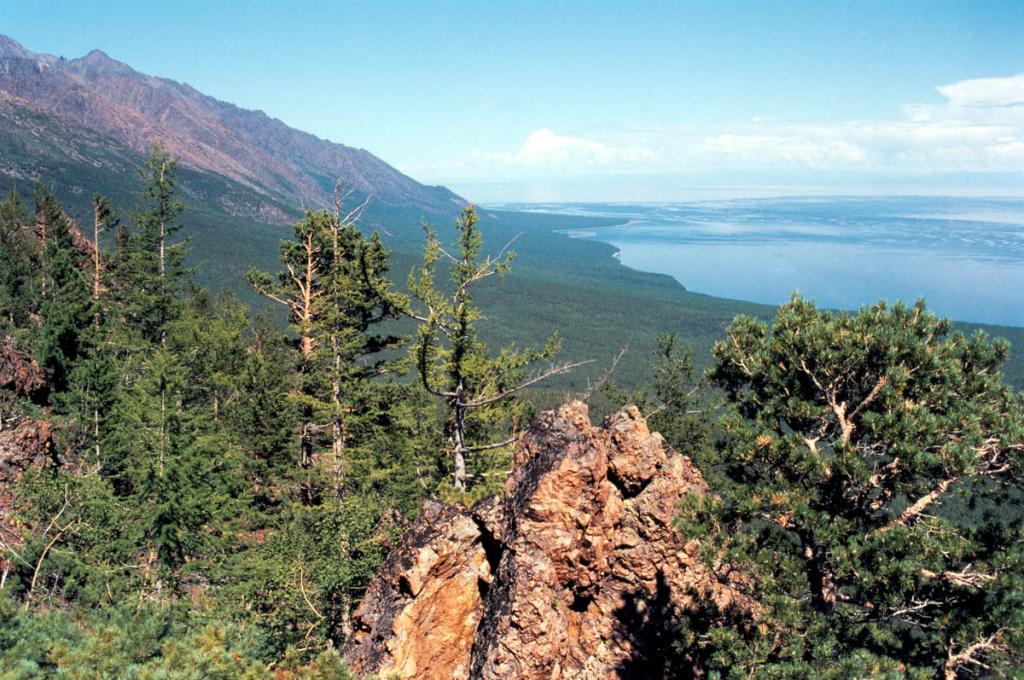 Подножия гор между мысами Заворотный (на горизонте) и Солонцовыми покрывают коренные сосновые и лиственничные рододендроновые леса.