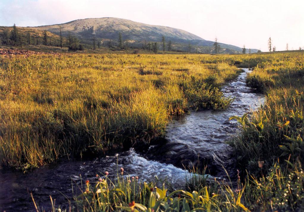 Первый километр великая азиатская река Лена течет по кустарниково-травянистой тундре (1460 м над ур.м.) в окружении девственной заповеданной природы.