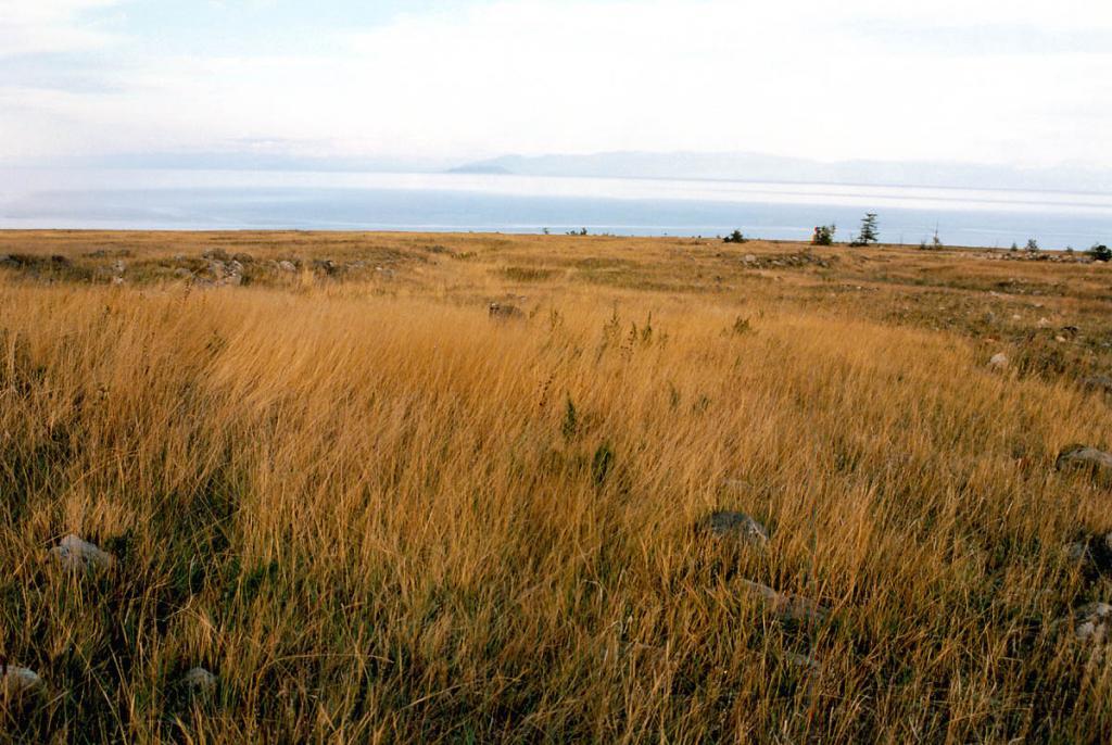 Отличительной чертой южной части северо-западного побережья является широкое распространение лесостепного ландшафта и крупных участков степей на конусах выноса мысов Онхолой, Хыр-Хушуун (Рытый), Шартлай, Анютхэ, Покойники, Саган-Марян. На снимке: каменистая разнотравно-злаковая степь на мысе Хыр-Хушуун. БЛГЗ.